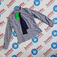 Школьная блузка для девочки в мелкую полосочку с галстуком Alamakota