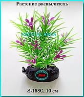 Растение Атман S-158C, 10см