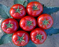 """Лоджейн F1 - томат, 100 семян, Enza Zaden  (Енза Заден) Голландия - Фасовка """"Фермер Центр"""""""