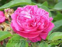 Пудра розы эфиромасличной, 20 г