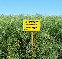 Рапс озимый LEMBKE Мерседес