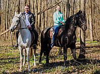 Сопровождение лошадьми Вашего корпоратива