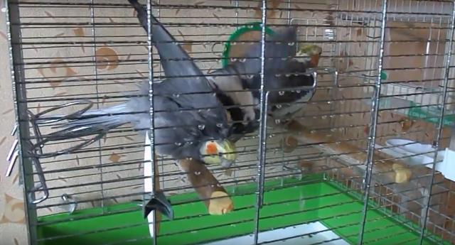 клетки для птиц в Харькове, Киеве, Херсоне, Николаеве