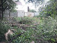 Обрезка тополя. Удаление тополей, спил, резка дерева.