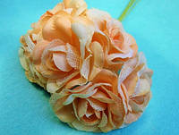 """Роза """"Двухцветная"""" уп. 36 шт. Нежно-персиковая"""