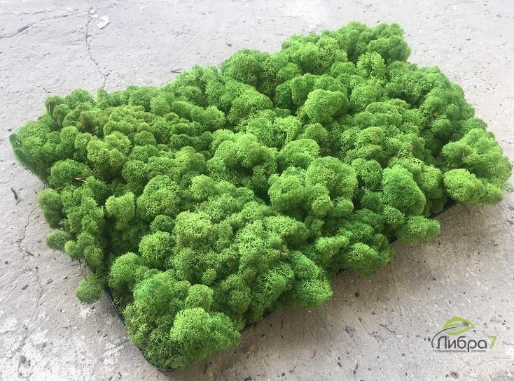 Стабилизированный мох опт  лесной зеленый от 4кг