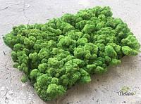 Стабилизированный мох опт  лесной зеленый оптом
