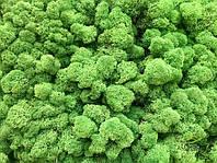 Стабилизированный мох опт  лесной зеленый от 4кг, фото 2