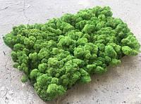 Стабилизированный мох оптом в упаковках 2-4кг.
