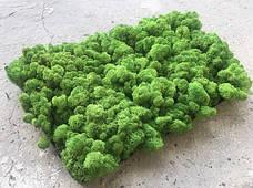 Стабилизированный мох