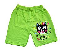 """Шорты детские """"Кошка"""" для девочек. трикотаж. размеры 4-8 лет"""