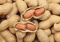 Новая выгода: производство арахиса.