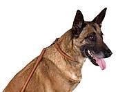 Круглый кожаный ошейник для собак + адресник с гравировкой