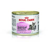 Royal Canin Babycat Instinctive котята до 4 месяцев, беременные и кормящие кошки