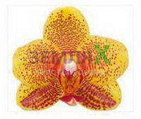 Орхидея Charming (Ø 12 см, h 70 см)