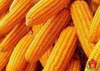 Агрометеорологічні умови вегетації кукурудзи