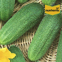 Огурец Доломит F1 / Dolomit F1 от Нунемс (Nunhems), Голландия, 1000 семян