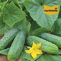 Огурец Спарта F1 / Sparta F1 от Нунемс (Nunhems), Голландия, 1000 семян