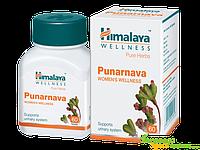 Пунарнава Боерхавия Хималая, Punarnava Himalaya, лечение инфекций, Аюрведа Здесь