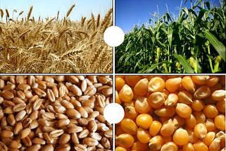 Закупка зерновых и масличных культур. Дорого!!!
