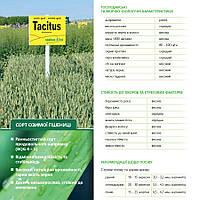 Озимая пшеница ТАЦИТУС (Австрия) ЭЛИТА