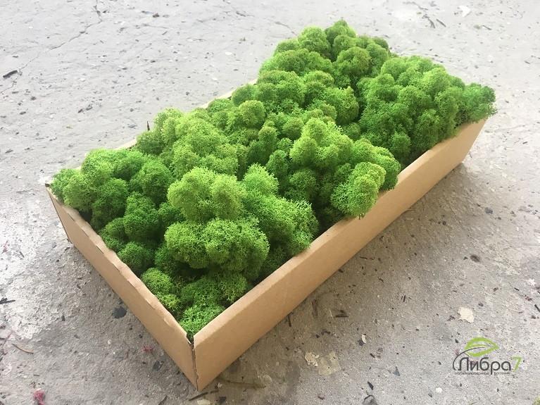 Мох стабилизированный ягель для фитостен Лесной зеленый