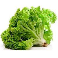 Семена салата Геркулес 1 кг. Тирас