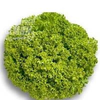 Николай салат 1 кг. Marawa Seeds Тирас
