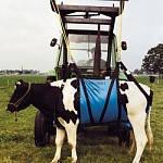 Підйомний механізм для корів, брезент