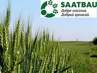 Озимая пшеница ТАЦИТУС (Австрия) 1-я репродукция
