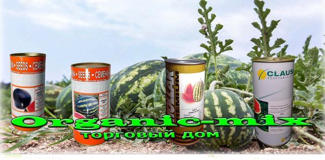 выращивение арбуза
