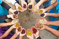 Разновидности сортов кофейных зерен.