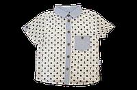 """Стильная рубашка для мальчика с коротким рукавом """"Якоря"""""""