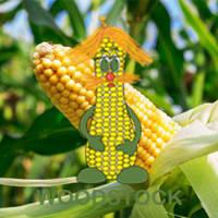 Гибриды кукурузы Woodstock