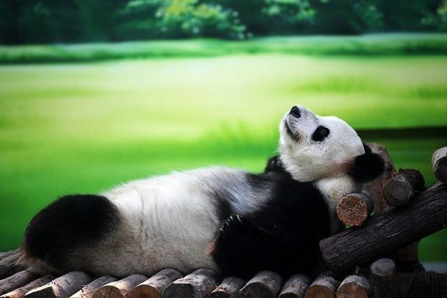 Аромакубики Бамбук и грепфрут