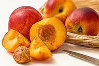 Украинские садоводы уже начали сбор урожая персиков