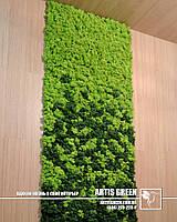 Живые стены из стабилизированных растений. Свежесть без полива до 5 лет!