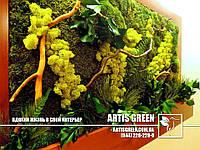 Фитокартины из растений, цветов и мха