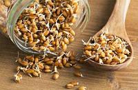 Пшеница для проращивания 200 гр
