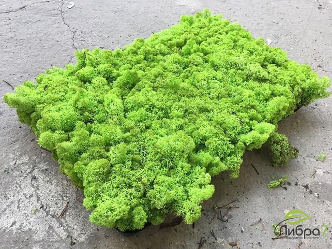 Стабилизированный мох опт  apple green от 4кг