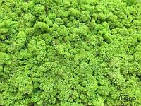 Стабилизированный мох опт  apple green от 4кг, фото 2