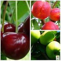 """Комплект плодовых саженцев """"Супер сладкое варенье"""" 3саж"""