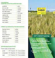 Озимая пшеница ЛУПУС (Австрия) 1-я репродукция