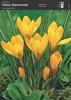 Крокус Yellow, 10+
