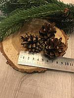 Шишка сосновая до 6 см, шишка для декора, шишки для камина