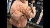 Шуба из меха ламы персиковая