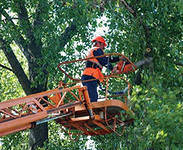 Спил валка обрезка деревьев