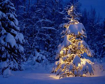 Зимняя фотосъемка – несколько простых советов