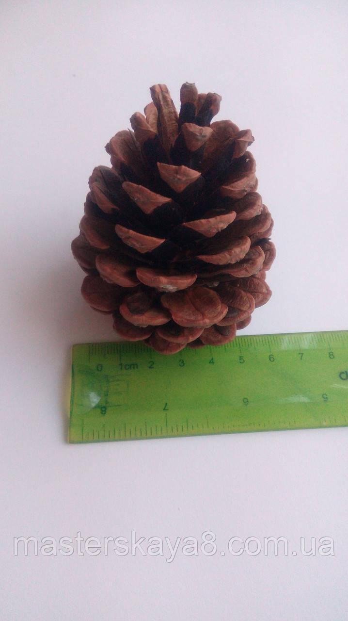 Шишка сосновая сортовая отборная от 6 см, диаметр 4 см, шишка для декора, шишки для камина