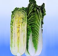 Зимородок F1 насіння капусти пекінської Lucky Seed 250 насінин